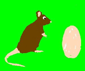mama rat waits while her egg hatches