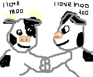 Two cows becoming friends