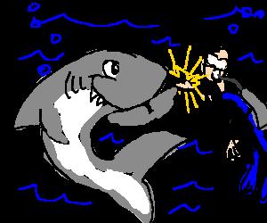 Bear shark high five