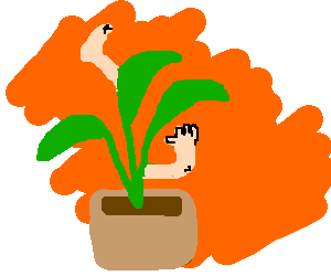 Plant with several limbs in an orange background