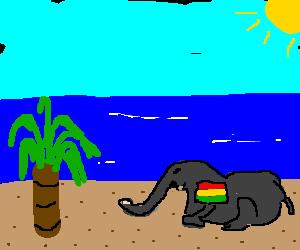 Jamaican elephant lounging on the beach