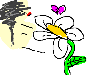 A daisy is sad 'cause whirlwind doesn't love her