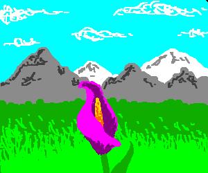A puple Calla Lily in a field.