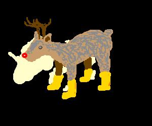 Rudolph in golden booties