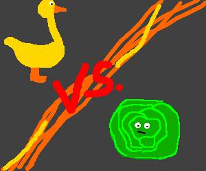 Duck vs cabbage