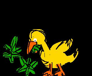 Duck eating weed