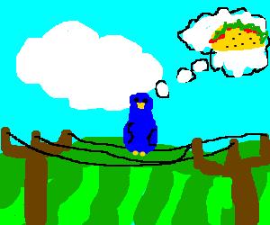 a bird dreams about tacos