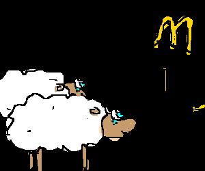 Two sheep head to McDonald's; hope food is good