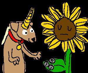Unicorn dog gives 7p to nonchalant sunflower