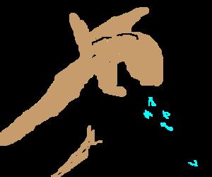 Llaughing Llama