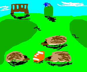 Hedgehogs play football in the park