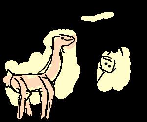 Pink llama ditches passenger