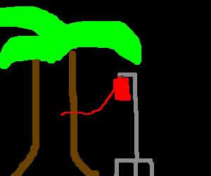Tree Man donating blood