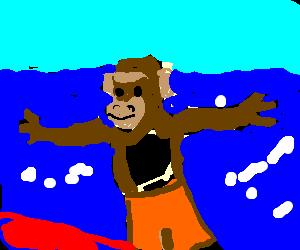 a surfing chimp