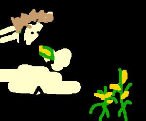 Man missing lower torso eats whole ear of corn