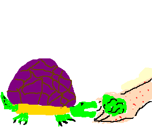 Purple-backed turtle fed by freckled hand