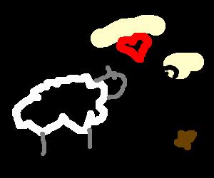 Sheep loves people who poop.