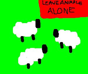Please don't harrass the sheep.