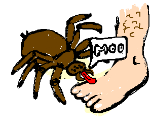 Spider who thinks he is a cow licks a foot