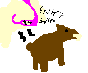 smelling a bear
