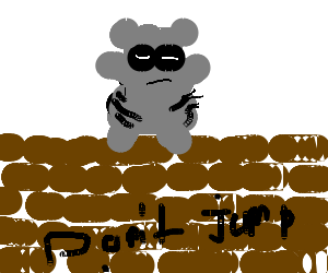 Suicidal Racoon