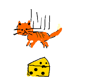 Cat falls on top of cheese