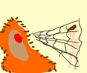 Giant hairy amoeba traps man in web