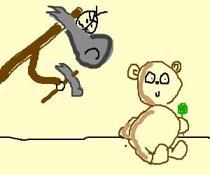 Angry hammer attacks unassuming bear cub.
