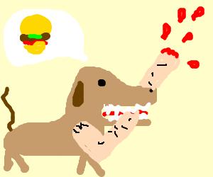 Dog  chewing on leg thinking about hamburgers