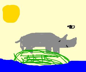 Rhino stuck on Bored Island