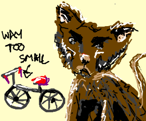 annoyed cat unhappy about the bike he recieved