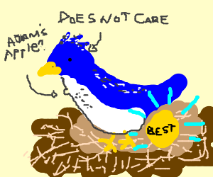 Bluejay is the best egglayer but he isn't proud