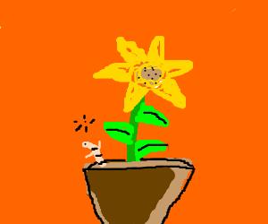 Draw something you like!