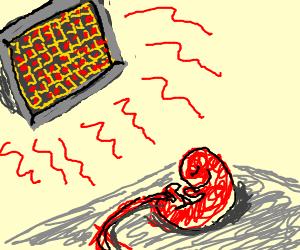 Heat-dried Human placenta