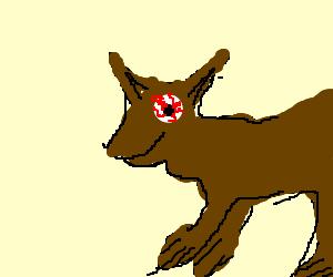 Kangaroo giving us the evil eye