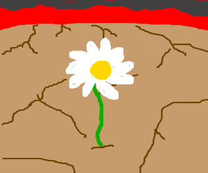 The Last Flower On The Earth