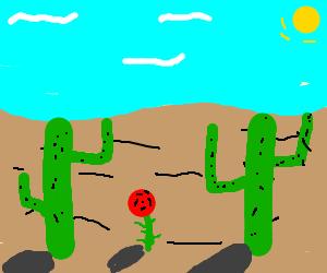 2 cacti 1 rose
