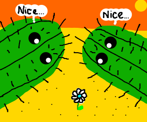 Two cactuses admire a flower in desert