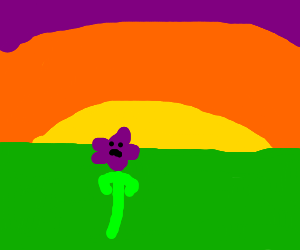 flower doesn`t care about sunset..