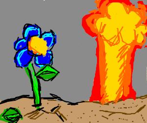 Flower grows under nuclear sky
