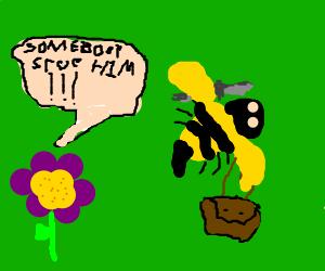 Killer bee robbing a flower