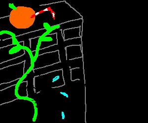 Spider climbs vines to reach orange juice