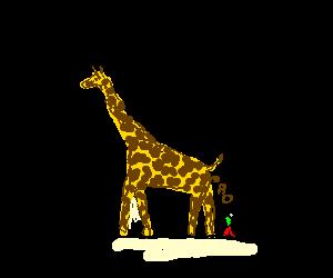 Giraffe defecates on a tiny person
