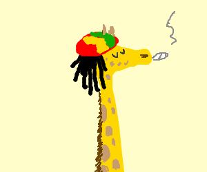 Rasta Giraffe