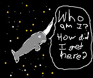 Confused narwhal in space