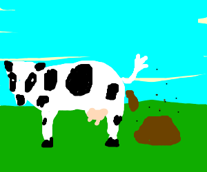 Cow pooping manure