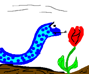 Blue Snake hisses at red rose