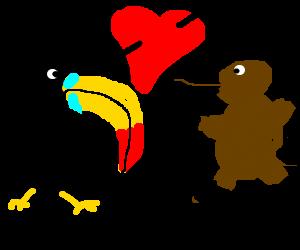 Toucan, Platypus fall in love