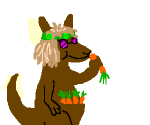 Hippie kangaroo is obsessed with carrots