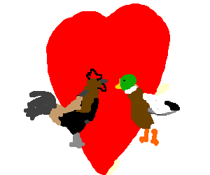 Rooster in love with a duck.